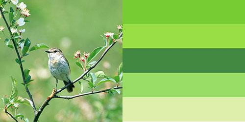 spring-palette16