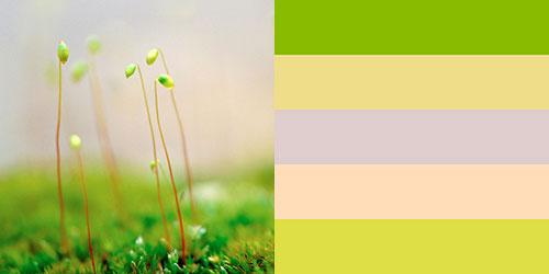 spring-palette19