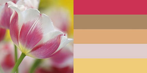 spring-palette7
