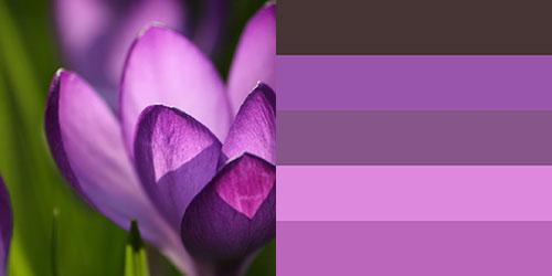 spring-palette9
