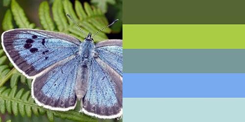 butterfly-palette10