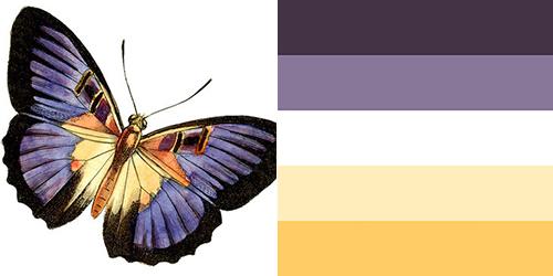 butterfly-palette11