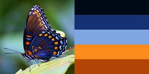 butterfly-palette12