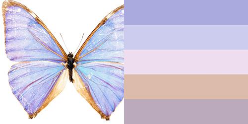 butterfly-palette14