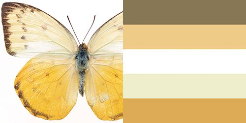 butterfly-palette15