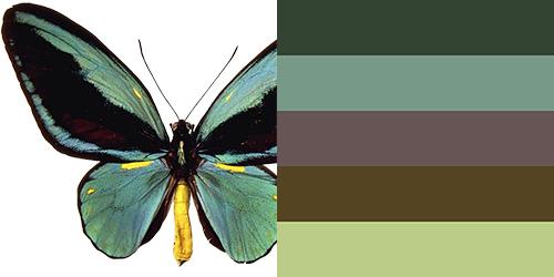 butterfly-palette16