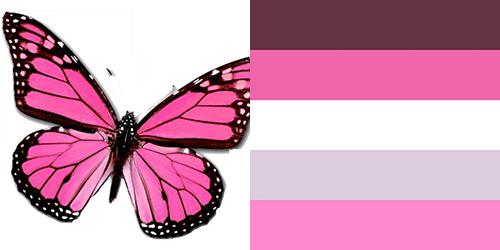 butterfly-palette17