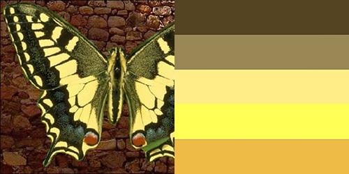 butterfly-palette18