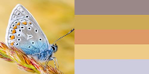 butterfly-palette19