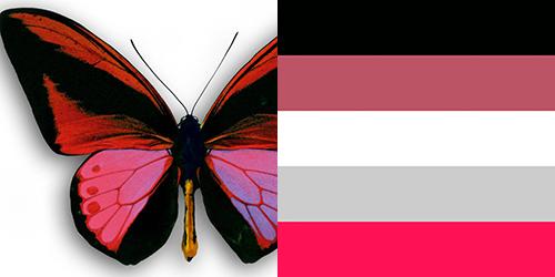 butterfly-palette2