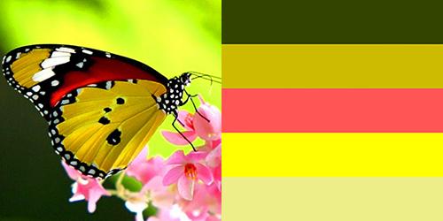 butterfly-palette3
