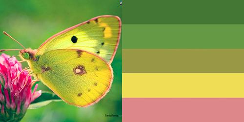 butterfly-palette4
