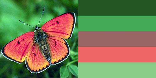 butterfly-palette5