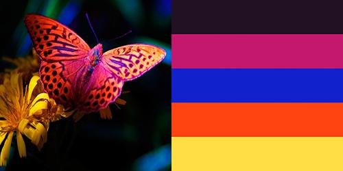butterfly-palette6