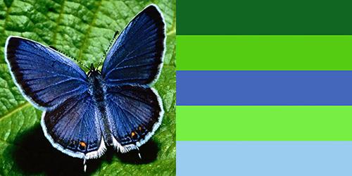 butterfly-palette7