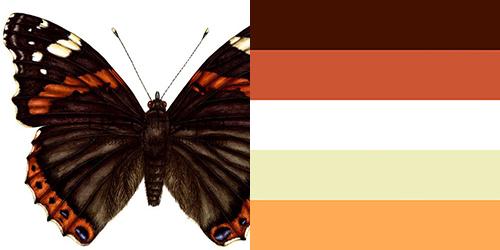 butterfly-palette8