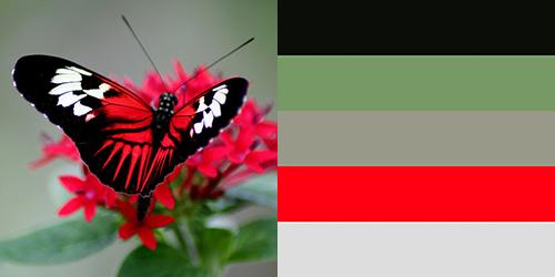 butterfly-palette9