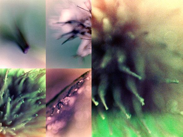 free-blur-background2