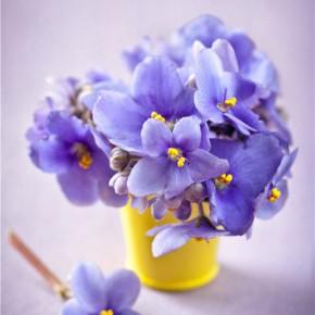 Колекція весняних зображень