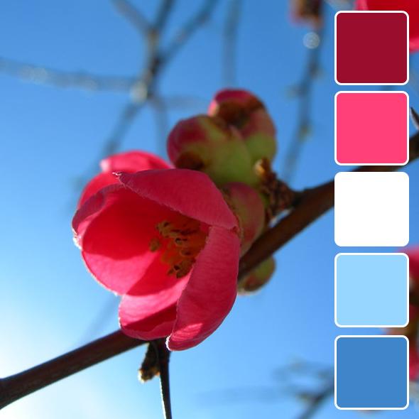 spring-color-pallets10