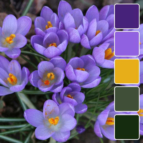 spring-color-pallets111