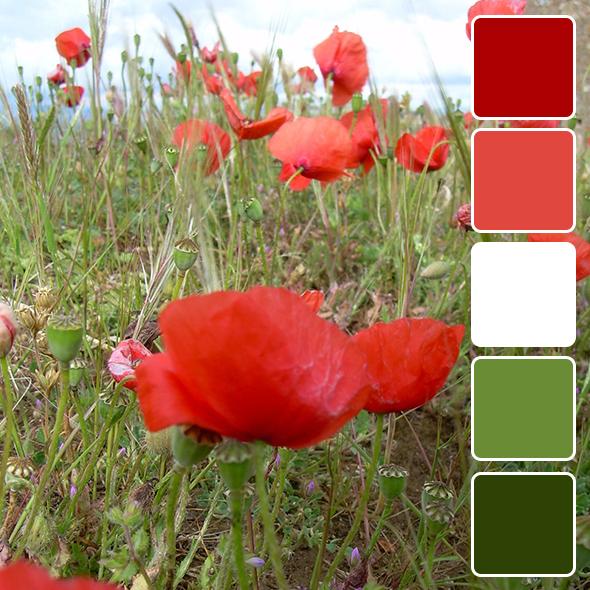 spring-color-pallets18