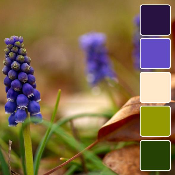 spring-color-pallets5
