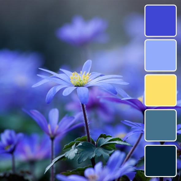 spring-color-pallets6