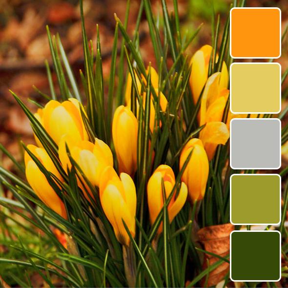 spring-color-pallets9