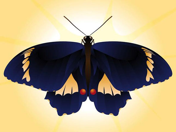 free-vector-butterfly1