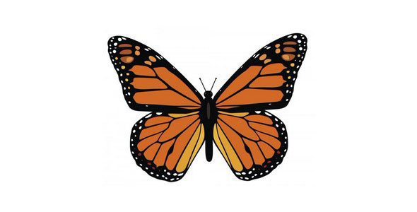 free-vector-butterfly10