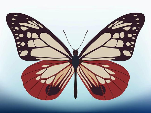 free-vector-butterfly8